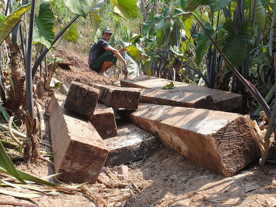 Phát hiện 3 hầm gỗ mun ở bản Cu Tồn ảnh 2