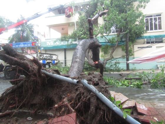 Vũng Tàu - Bến Tre mưa lớn, gió giật mạnh, Khánh Hòa - Ninh Thuận ngập lụt, đường sắt tê liệt  ảnh 1