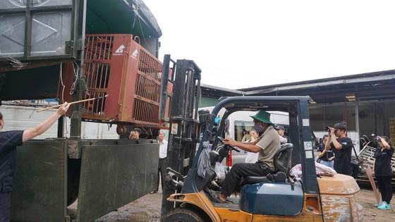 Tiền Giang chuyển giao 5 cá thể gấu tới Vườn Quốc gia Tam Đảo ảnh 1