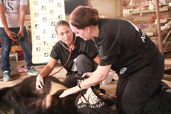 Tiền Giang chuyển giao 5 cá thể gấu tới Vườn Quốc gia Tam Đảo ảnh 4