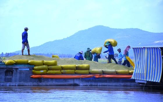 ĐBSCL khẩn cấp gặt lúa chạy lũ ở vùng biên giới  ảnh 8