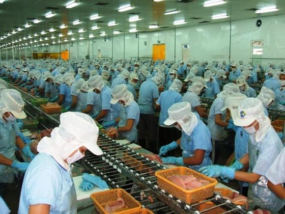 4.000 tỷ đồng xây dựng vùng nuôi cá tra công nghệ cao lớn nhất ĐBSCL ảnh 3