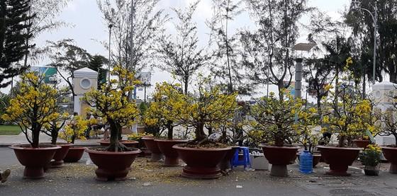 ĐBSCL: Hoa kiểng giảm giá chiều 30 Tết ảnh 1