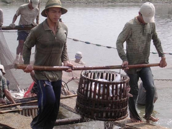 Năm 2019: Xuất khẩu cá tra nỗ lực đạt 2,4 tỷ USD ảnh 1