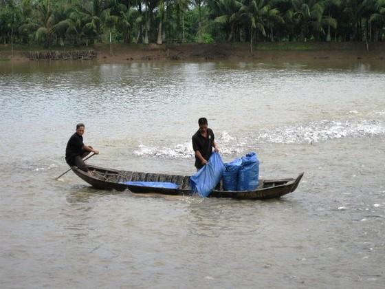 Giá cá tra bất ngờ giảm mạnh  ảnh 2