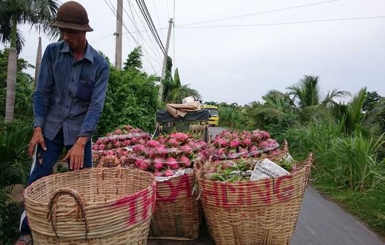 Hướng đến mục tiêu xuất khẩu trái cây đạt 3,6 tỷ USD vào năm 2020 ảnh 2