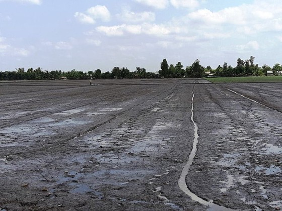 Tập trung xuống giống hơn 1,6 triệu ha lúa hè thu né rầy và hạn mặn ảnh 2