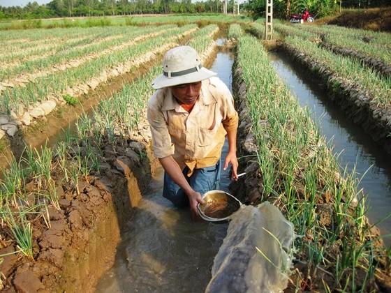 Chuyển đổi 126.333ha đất lúa kém hiệu quả trong năm 2019 ảnh 3