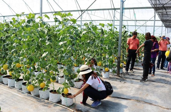 Phát triển bền vững du lịch nông nghiệp tại ĐBSCL ảnh 6