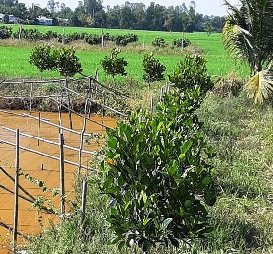 Cảnh báo ùn ùn trồng mít Thái xuất sang Trung Quốc ảnh 2