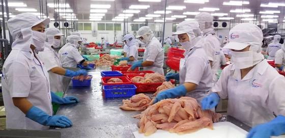ĐBSCL: Giá cá tra giảm, người nuôi lỗ nặng  ảnh 1