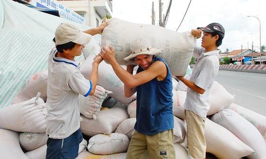 Xuất khẩu gạo sang Trung Quốc tập trung chính ngạch ảnh 1