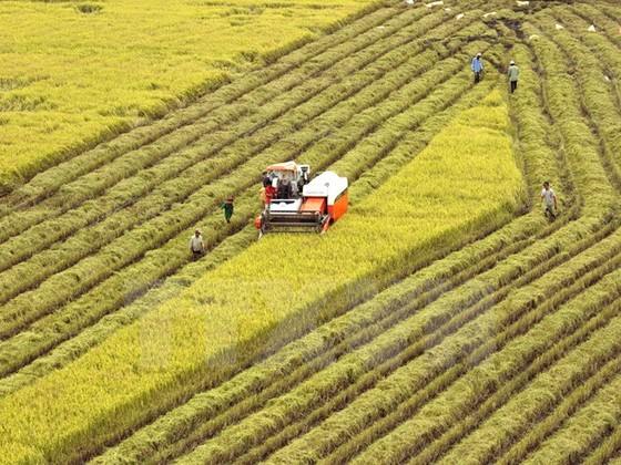"""Phát triển lúa gạo bền vững: Đổi mới 3 """"trụ cột"""" ảnh 1"""