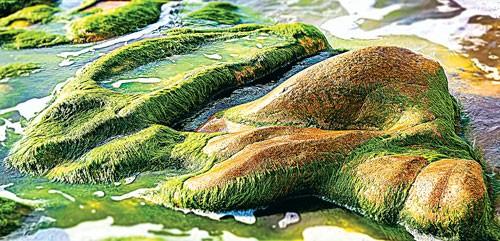 Rong rêu Cổ Thạch ảnh 5