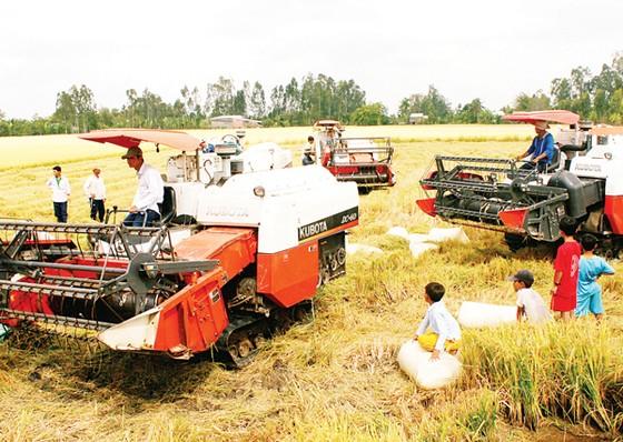 Người Việt mua gạo giá cao hơn xuất khẩu ảnh 1