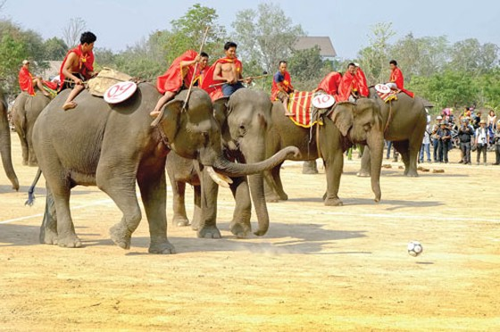Độc đáo đua voi Buôn Đôn ảnh 6