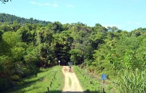 Phú Yên lấy 870ha rừng làm dự án nuôi bò ảnh 1