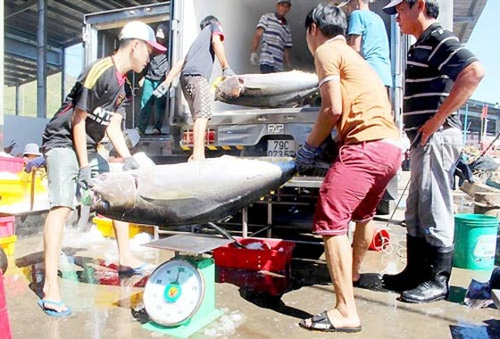 Giá cá ngừ đại dương bị thao túng ảnh 1