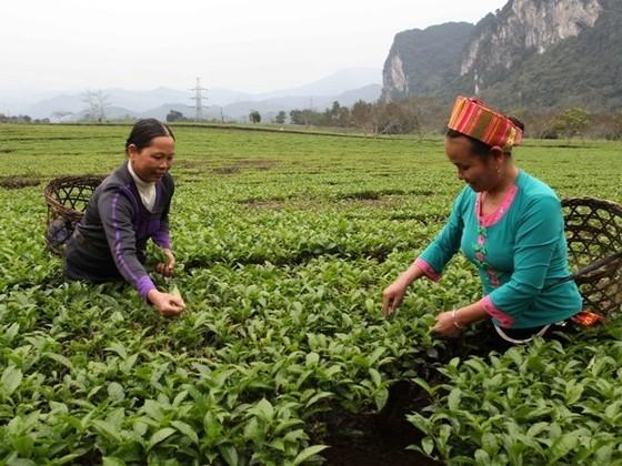 Tín dụng nông nghiệp nông thôn vừa thiếu vừa yếu ảnh 1