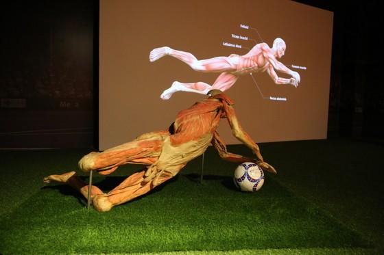 Triển lãm xác ướp được đề cử là sự kiện tồn tại của ngành mỹ thuật, nhiếp ảnh ảnh 1
