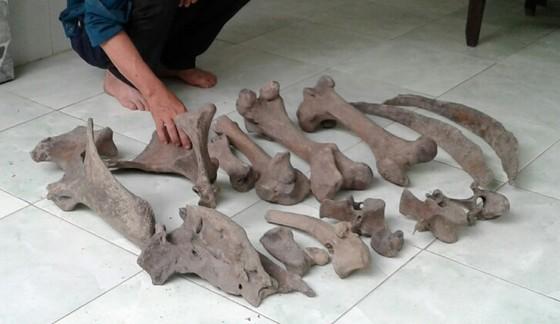 Người dân Bến Tre phát hiện nhiều mảnh xương lạ dưới mương nước ảnh 2