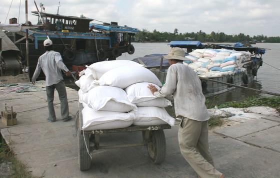 Bước ngoặt tạo nền tảng vững chắc cho hạt gạo trên thương trường ảnh 1
