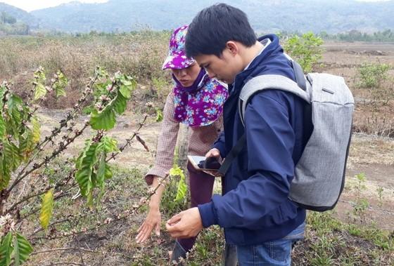 Tạm dừng hoạt động mỏ đá làm ảnh hưởng vườn cà phê ảnh 2