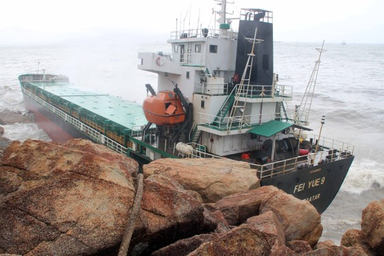 Không để xảy ra thảm họa về môi trường trên vùng biển Quy Nhơn  ảnh 5