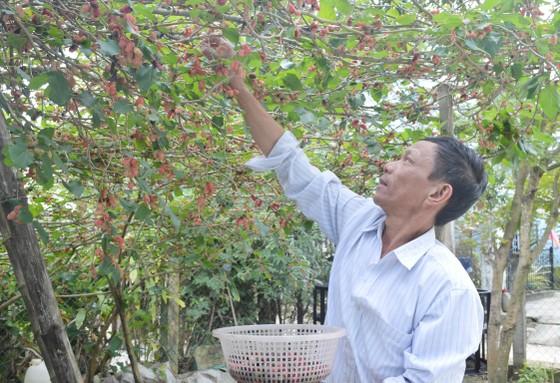 Làng nghề Quảng Nam rộn ràng đón tết ảnh 4