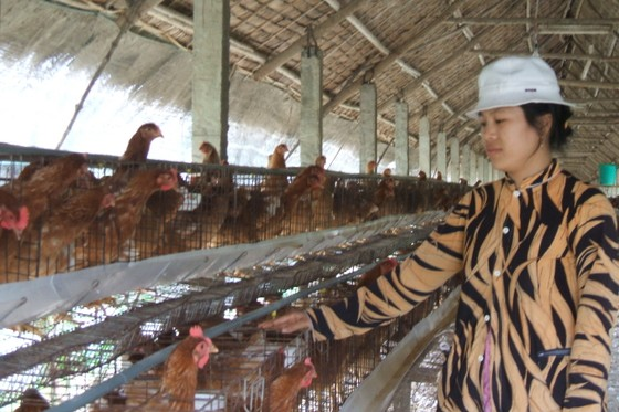 Báo động thực phẩm chăn nuôi, thuốc thú y kém chất lượng ảnh 1