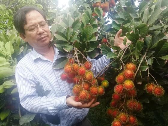 ĐBSCL: Chuyển đổi 118.290 ha cây trồng trên đất lúa ảnh 1