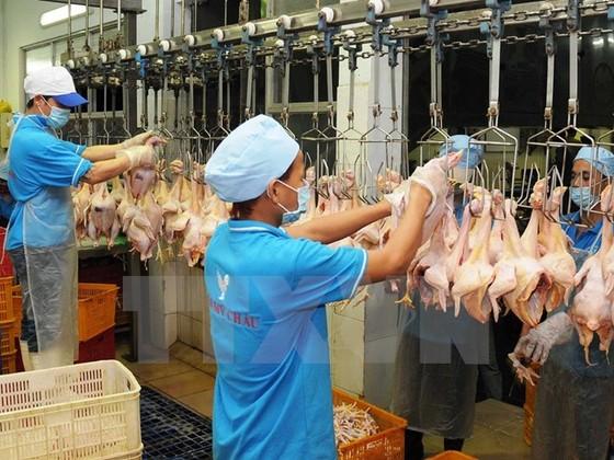 Thịt gà VN gian nan tìm đường xuất khẩu ảnh 1