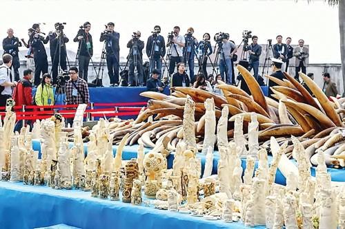 Đóng cửa chợ ngà voi lớn nhất thế giới ảnh 1