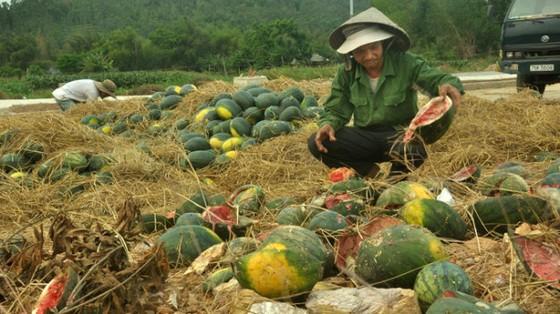 Tại sao nông sản liên tục rớt giá? ảnh 1
