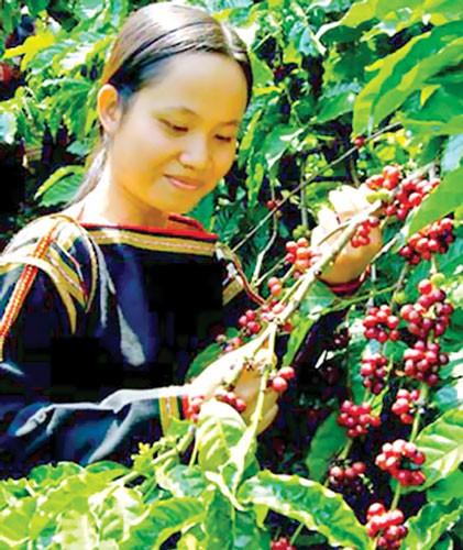Bảo vệ thương hiệu nông sản Việt Nam ảnh 1