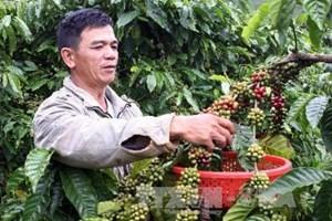 Dư nợ cho vay nông nghiệp nông thôn tăng 14,3% ảnh 1