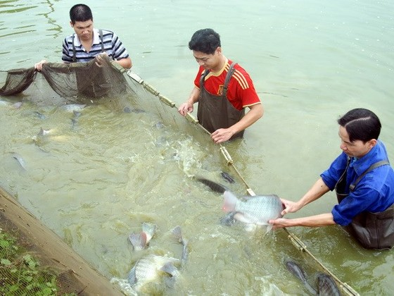 Rà soát chính sách khai thác, nuôi trồng thủy sản ảnh 1