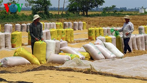 Cần thay đổi chính sách mua tạm trữ lúa gạo ảnh 1