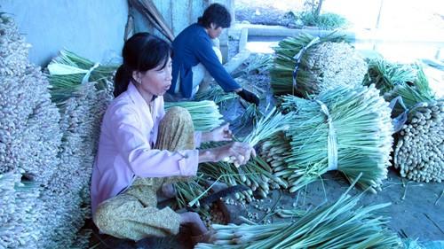 Đừng dồn gánh nặng lên vai người trồng lúa ảnh 1