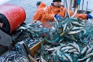EU thông qua 6,5 tỷ EUR cải cách nghề cá ảnh 1