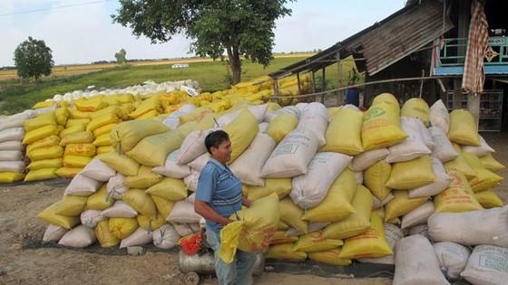 Nông dân không hưởng lợi trúng thầu gạo ảnh 1