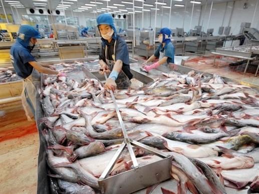 Cá tra lại bị áp thuế chống bán phá giá Hoa Kỳ ảnh 1