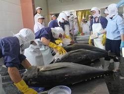 Quản lý nghề cá ngừ đại dương để phát triển bền vững ảnh 1