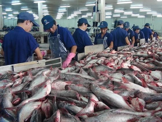 Sửa đổi quy định nuôi, xuất khẩu cá tra ảnh 1