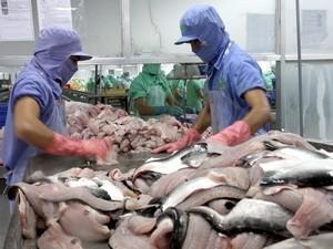 30% người nuôi cá tra không tham gia liên kết ảnh 1