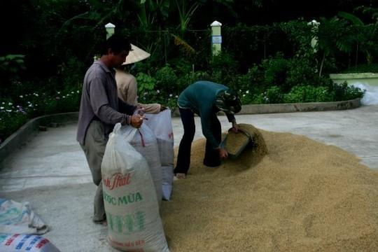 Jasmine sẽ là thương hiệu gạo Việt Nam ảnh 1