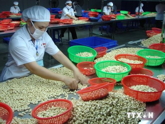 Điều Việt Nam chiếm gần 1/2 giá trị xuất khẩu toàn cầu ảnh 1
