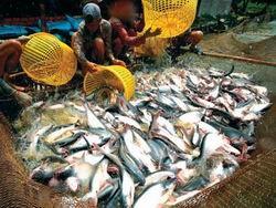 Giám sát dư lượng chất độc hại thủy sản ảnh 1