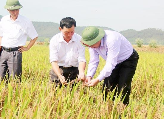 """""""Vẽ"""" màu lúa trên quê hương ảnh 1"""