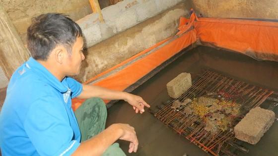 Không có chuyện nuôi lươn bằng thuốc tránh thai ảnh 1